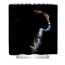 Highlighted Shadow Shower Curtain by Maris Sherwood