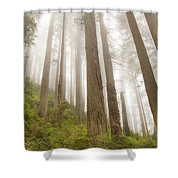 Hike Through The Redwoods Shower Curtain