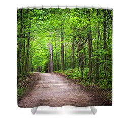 Shower Curtain featuring the photograph Hiking Trail In Green Forest by Elena Elisseeva