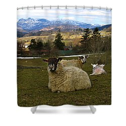 Hill Sheep Shower Curtain