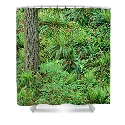 Hillside Ferns Shower Curtain by Greg Vaughn - Printscapes