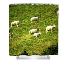 Hillside Pasture Shower Curtain