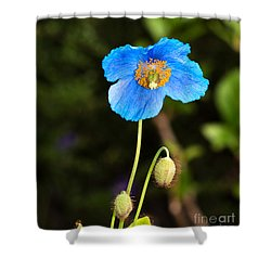 Himalayan Blue Poppy Shower Curtain by Louise Heusinkveld