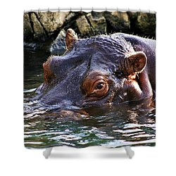 Hippo 3779_2 Shower Curtain