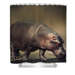 Shower Curtain featuring the photograph Hippo by Charuhas Images