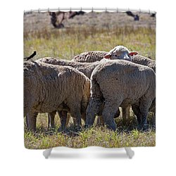 Hitching A Ride Shower Curtain by Mike  Dawson
