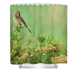 Shower Curtain featuring the photograph Hitting The High Note by John De Bord