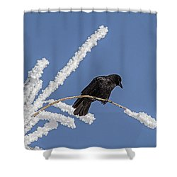 Hoarfrost And The Crow Shower Curtain by Alana Thrower