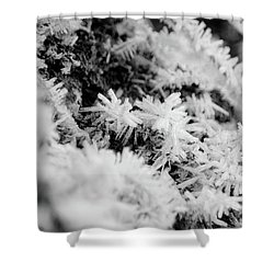 Shower Curtain featuring the photograph Hoarfrost by Erin Kohlenberg