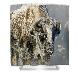 Hoarfrosted Bison In Yellowstone Shower Curtain