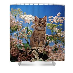 Hogging All The Hogweed Shower Curtain