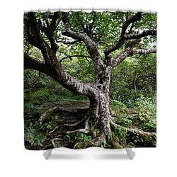 Shower Curtain featuring the photograph Hold Firm by Gary Smith