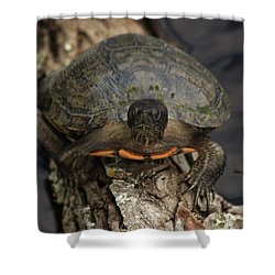 Holding On Shower Curtain by Kim Henderson