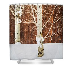 Holiday Aspens Shower Curtain