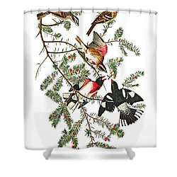 Shower Curtain featuring the photograph Holiday Birds by Munir Alawi
