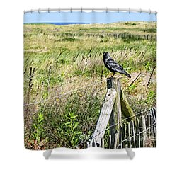 Holland Dunes - Jackdaw On A Post Shower Curtain