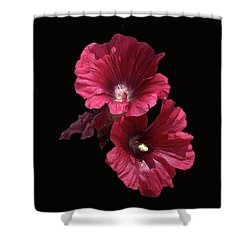 Hollyhock Glory Shower Curtain