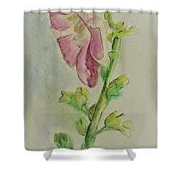 Hollyhock The Harbinger Of Summer Shower Curtain