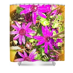 Hollywood Flower Stars Shower Curtain