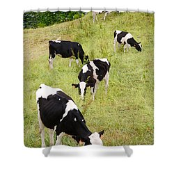 Holstein Cattle Shower Curtain by Gaspar Avila