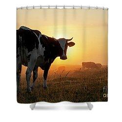 Holstein Friesian Cow Shower Curtain