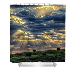 Holy Cow Shower Curtain by Fiskr Larsen