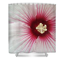 Holy Hibiscus Shower Curtain by Emerald GreenForest