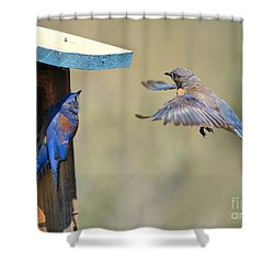 Home Inspection Shower Curtain by Mike Dawson