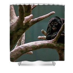 Home On The Limb Shower Curtain