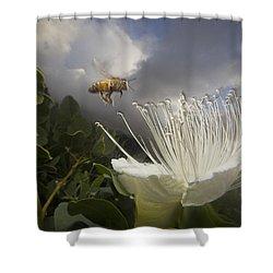 Honey Bee Apis Mellifera Approaching Shower Curtain by Mark Moffett