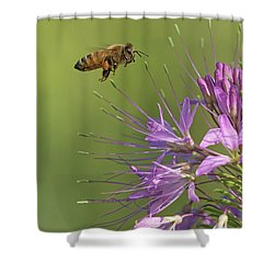 Honey Bee At Work Shower Curtain