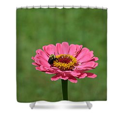Honey Bee At Work Shower Curtain by Linda Geiger
