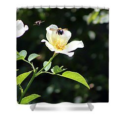 Honey Bees In Flight Over White Rose Shower Curtain