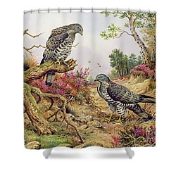 Honey Buzzards Shower Curtain by Carl Donner