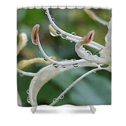 Honey Dew  Shower Curtain by Rachel Hannah