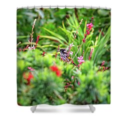 Honey Eater, Bushy Lakes Shower Curtain by Dave Catley