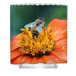 Honeybee On Orange Flower Shower Curtain