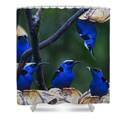 Honeycreeper Shower Curtain