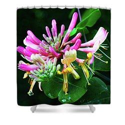 Honeysuckle Bloom Shower Curtain