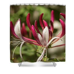 Honeysuckle Flower Shower Curtain