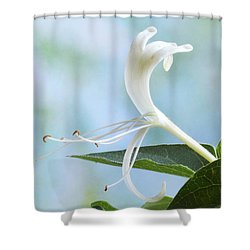 Shower Curtain featuring the photograph Honeysuckle Portrait. by Terence Davis