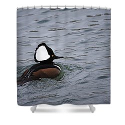Hooded Merganser 3 Shower Curtain by Gary Hall
