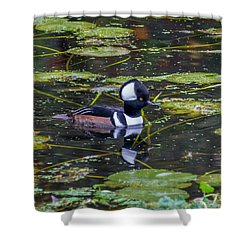 Shower Curtain featuring the photograph Hooded Merganser by Jerry Cahill