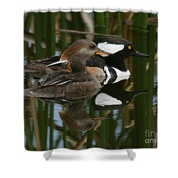 Shower Curtain featuring the photograph Hooded Mergansers by Myrna Bradshaw