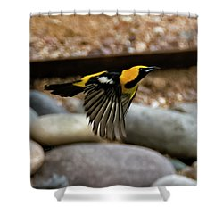 Shower Curtain featuring the photograph Hooded Oriole H37 by Mark Myhaver
