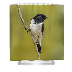 Hooded Robin Shower Curtain by Racheal  Christian