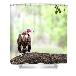 Hooded Vulture Shower Curtain