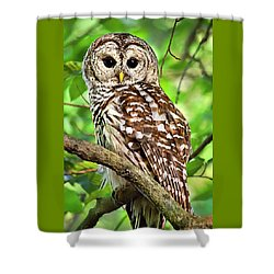 Shower Curtain featuring the photograph Hoot Owl by Christina Rollo