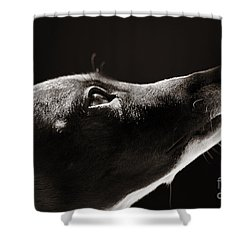 Shower Curtain featuring the photograph Hopeful by Angela Rath
