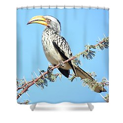 Hornbill In Thorn Tree Shower Curtain